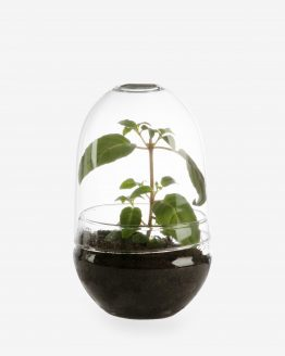 Plant Cover Glass Small